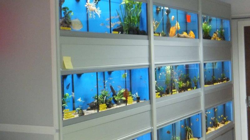 The Fish Bowl Aquatic Store
